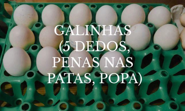 Ovos caseiros para incubação ou consumo