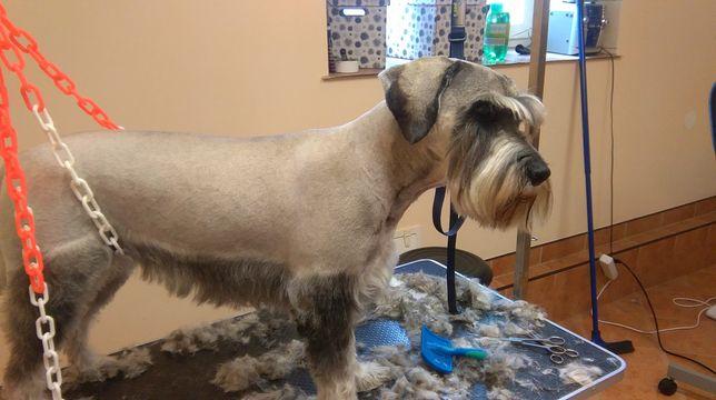 Psi fryzjer gromer mobilny