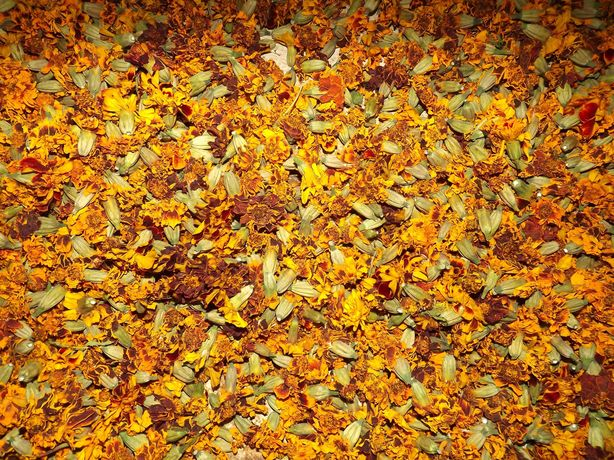 Продам квіти чорнобривців(цветы бархатцев)