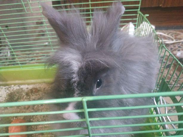 Продам кролика декоративного.