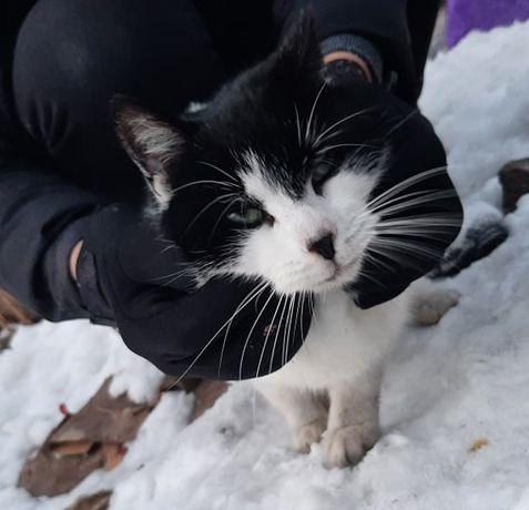 Młoda kotka Beza szuka domu