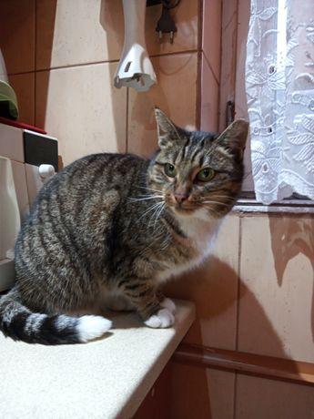 Zaginęła kotka w skarpetkach