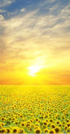 Переробка(купівля) та обмін соняшнику на олію.