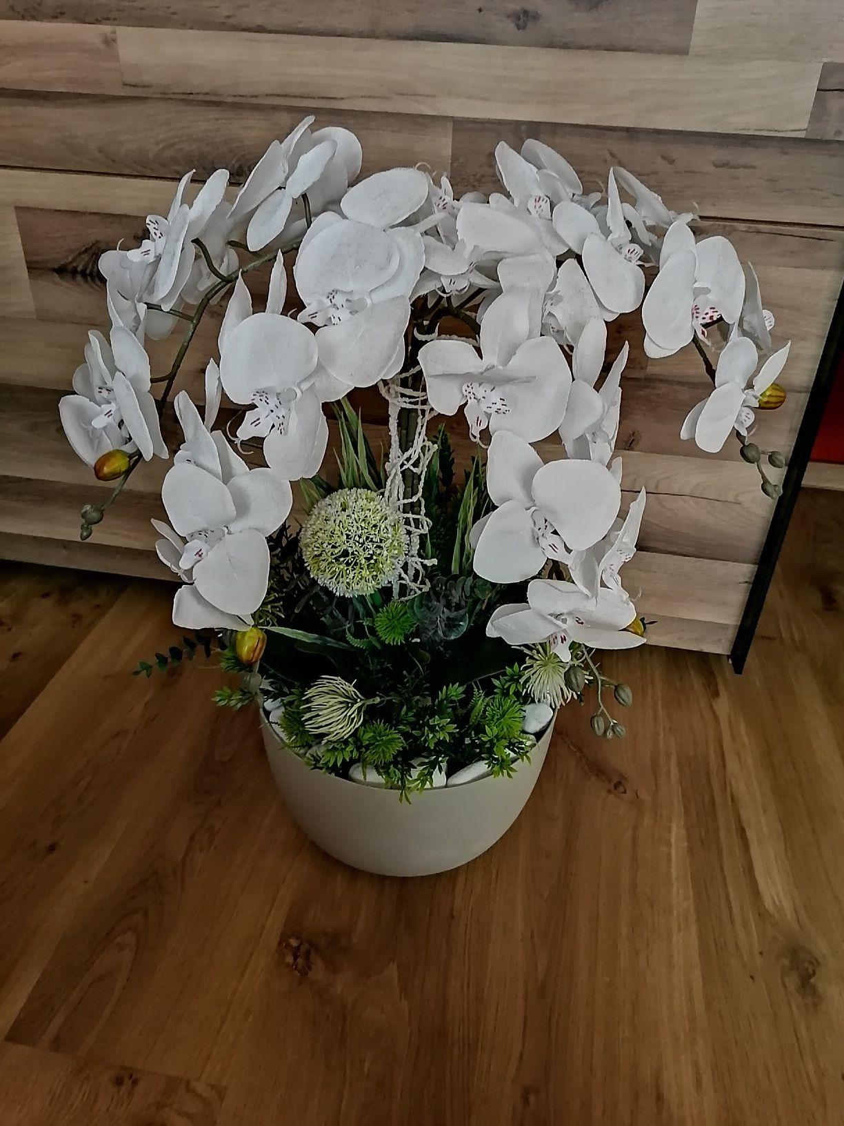Piękny storczyk 4 pędy