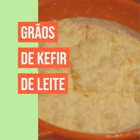 Grãos KEFIR de leite BIOLÓGICO Probiótico