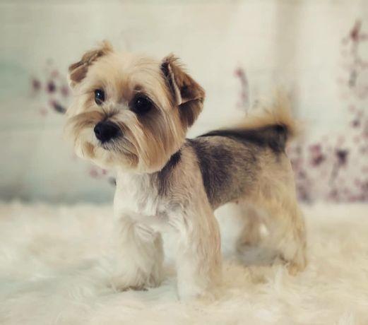 Kurs groomerski 160h - 4 tygodnie, kurs psiego fryzjera KATOWICE