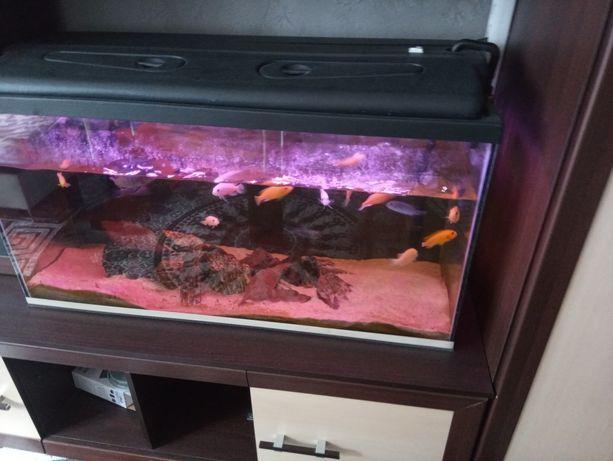 Akwarium z wyposazeniem