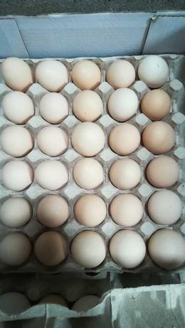Świeże jajka wiejskie