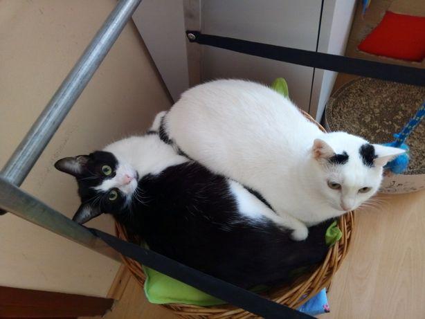 Milutkie kotki szukają spokojnego domku