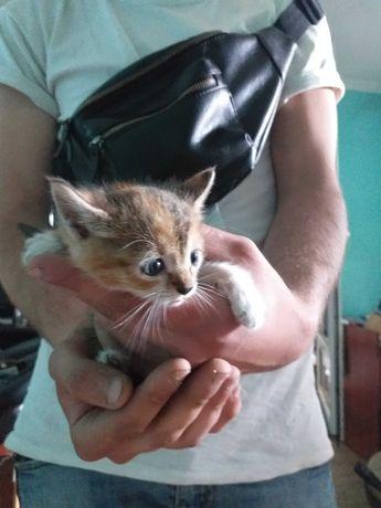 Котята даром, подарю котят.