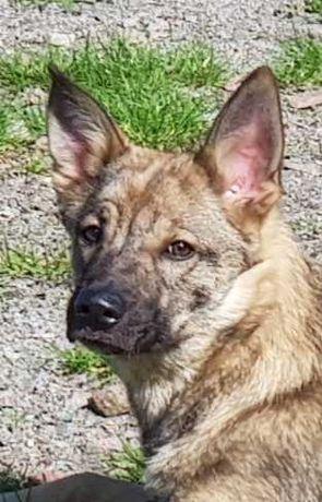 Найден/Замечен щенок (приблизительно 5 месяцев)!