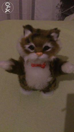 Sprzedam tanczaco- mowiacego kotka