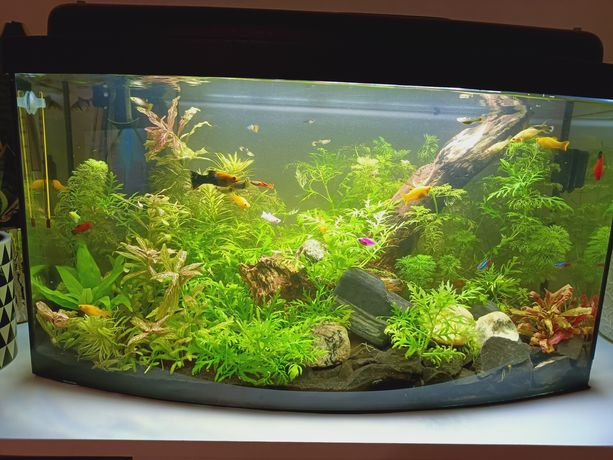 Akwarium panoramiczne 60l