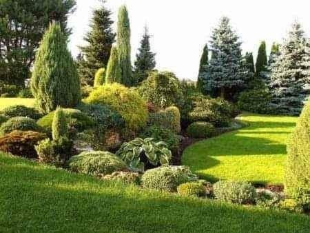 Pielęgnacja i czyszczenie ogrodów działek