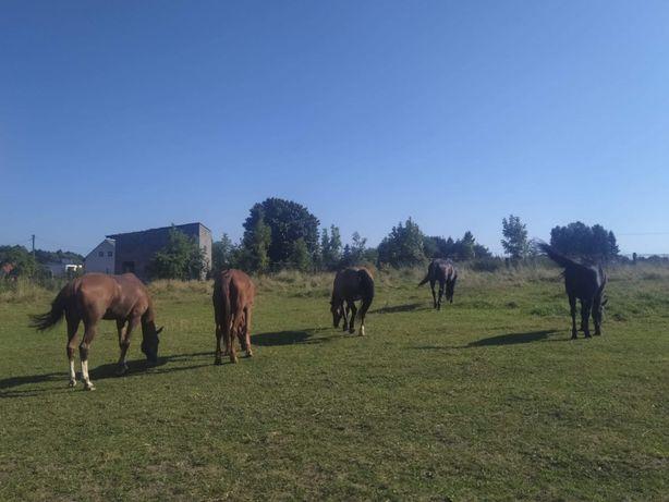 boks dla konia okolice Gliwic