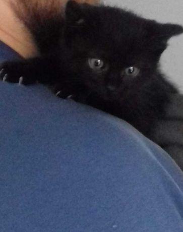 Małe kotki pilnie szukają domu!