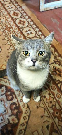 Котики охотники ищут новых хозяев