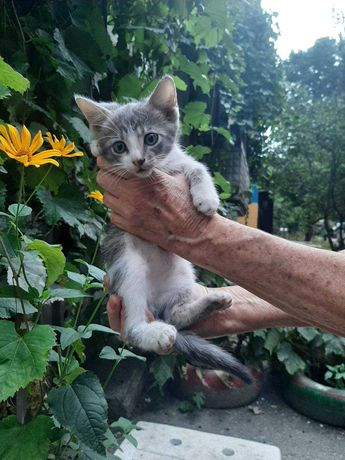 Котенок в поисках дома