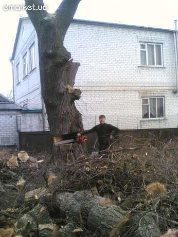 Спил деревьев, спилить ветки, удалить пень в Харькове и области
