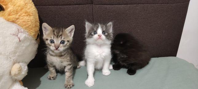 Котята разных окрасов