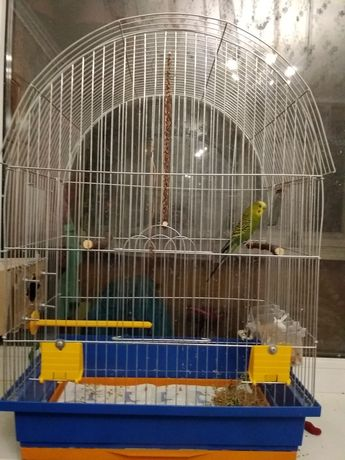 Продам попугая з кліткою.