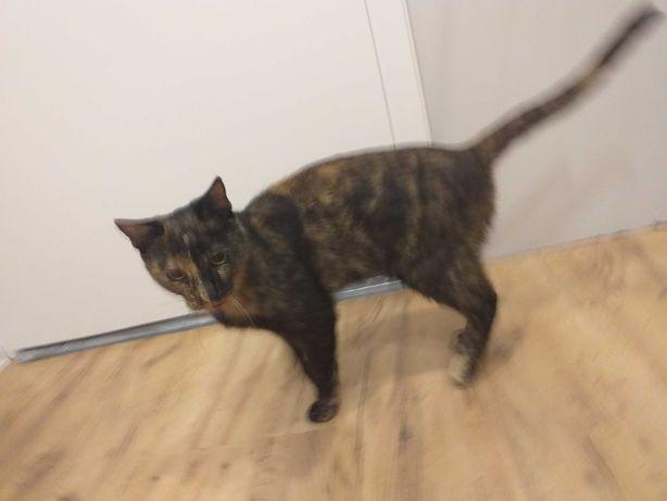 Znaleziono kocice krapkowice  po ulicy zeromskiego