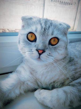 Томас ждёт ваших кошечек))