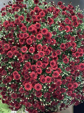 Хризантема, хризантема мультифлора, шаровидна