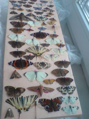 Колекция жуков и бабочек,насекомые