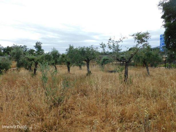 Terreno Agrícola Soalheira Fundão
