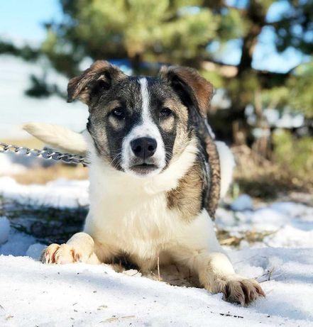 Пес, пёс, собака, собачка, щеня, щенок 7 месцев Эскимо