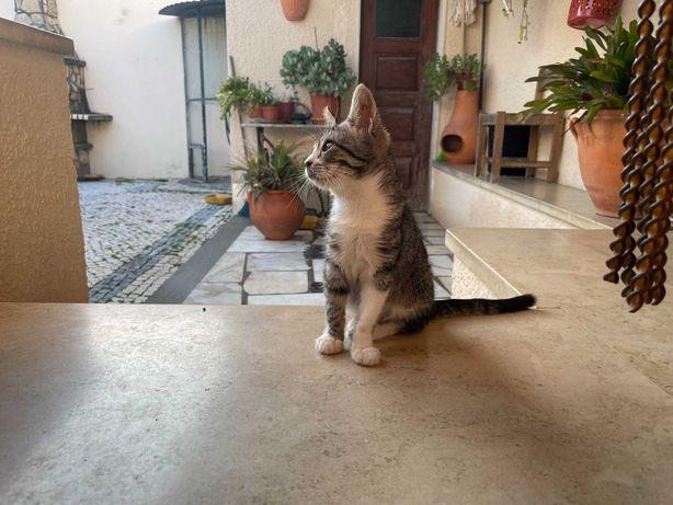 Gatos para adopção x3