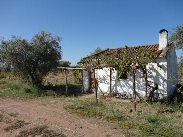 Terreno de 5,5 hectares com olival, vinha e 3 montes