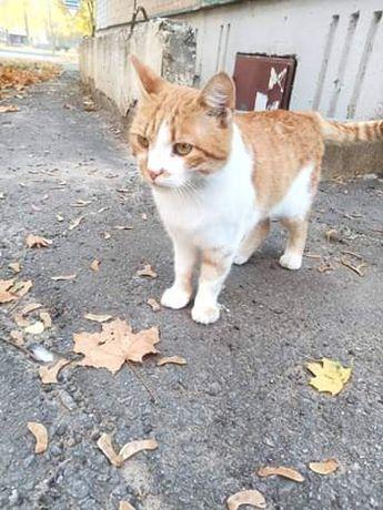 Отдам рыже-белого кота,1,5 года