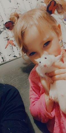 Oddam rocznego szczurka