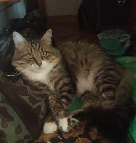Пропала кошка на ЮЭСС