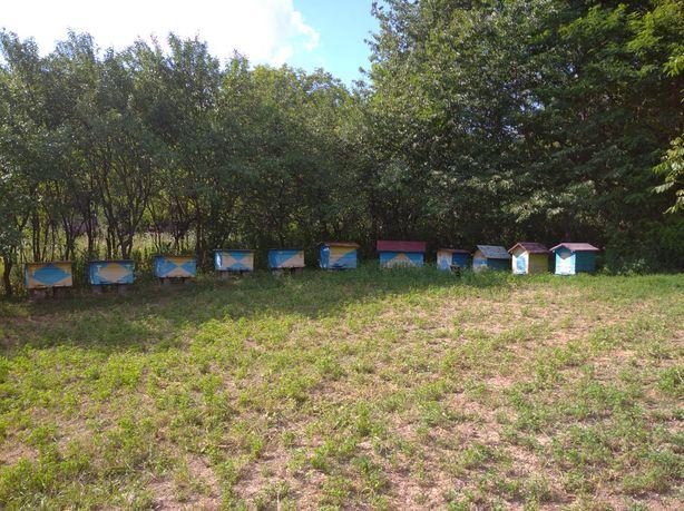Мед натуральний (липа, різнотрав'я, соняшник)