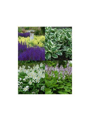 Rośliny kwiaty byliny