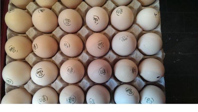 Инкубационные яйца Бройлеров