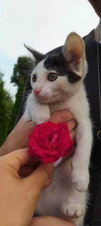 prześliczne miłe koteczki do oddania za darmo