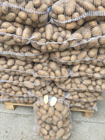 Ziemniaki jadalne Irys