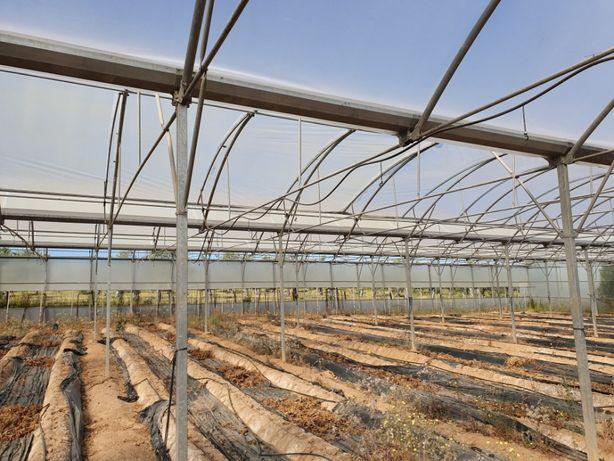 Estufa Agricola com 3000 m2 desmontada