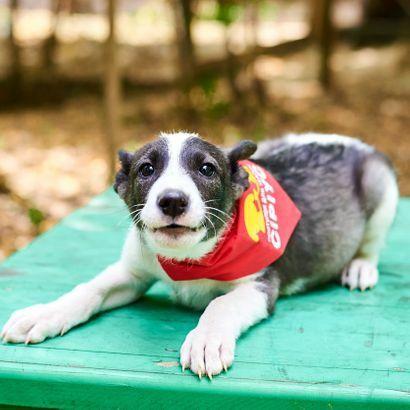 Смышлённый мальчик Ластик ищет дом щенок щенки щенята пес щеночки