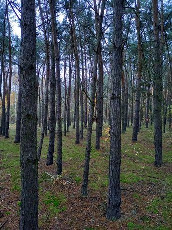 Działka leśna LAS