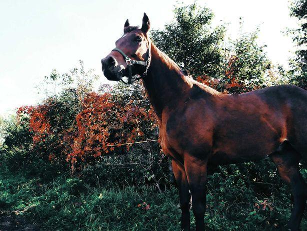 Wolne boksy, pensjonat dla koni