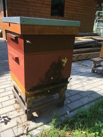 rodziny pszczele przezimowane , ramka wielkopolska