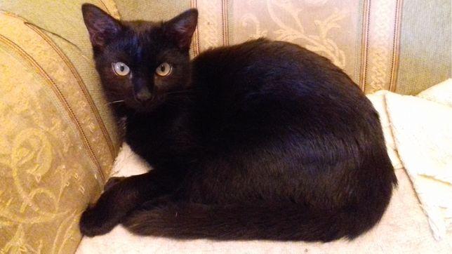 Czarne kociaki czekają na dom - Okruszek i Mama
