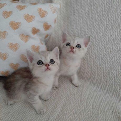 Вискасные котятки ищут любящих хозяев