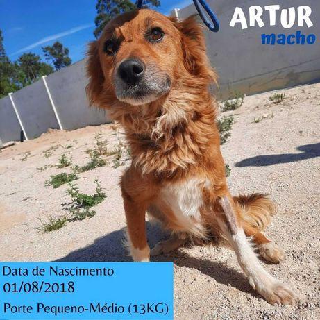 Cão Porte Pequeno-Médio (13kg) Para Adoção (Artur)