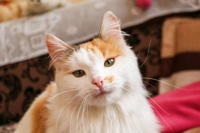 Стерилизованная и очень нежная кошка в добрые руки